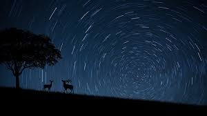 animals night vision is more than humans