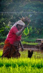 importance of women in agriculture